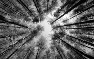 Black And White Images Of Trees  5 Free Wallpaper