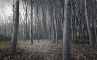 Black And White Images Of Trees  6 Cool Wallpaper