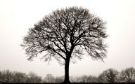 Black And White Images Of Trees  8 High Resolution Wallpaper