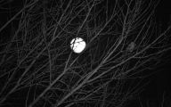 Black And White Moon Images  2 Hd Wallpaper