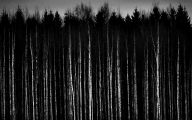 Black And White Pictures Anime Forest  12 Free Hd Wallpaper