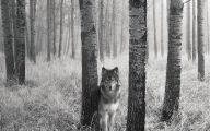 Black And White Pictures Anime Forest  20 Cool Hd Wallpaper