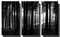 Black And White Pictures Anime Forest  21 Free Wallpaper