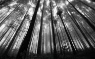 Black And White Pictures Anime Forest  3 Wide Wallpaper