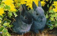 Cute Black Bunny Hd Wallpaper  25 Free Hd Wallpaper
