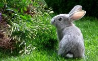 Cute Black Bunny Hd Wallpaper  27 Desktop Background