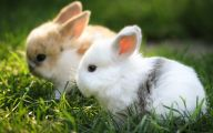 Cute Black Bunny Hd Wallpaper  32 Background