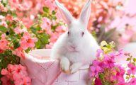 Cute Black Bunny Hd Wallpaper  7 Background Wallpaper