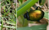 Green And Black Insect  1 Wide Wallpaper