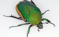 Green And Black Insect  20 Cool Hd Wallpaper