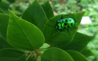 Green And Black Insect  7 Hd Wallpaper