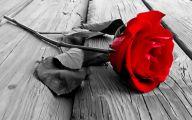 Red And Black Rose Wallpapers  15 Desktop Wallpaper