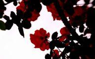 Red And Black Rose Wallpapers  17 Desktop Wallpaper