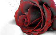 Red And Black Rose Wallpapers  8 Wide Wallpaper