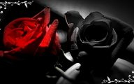 Red And Black Rose Wallpapers  9 Widescreen Wallpaper