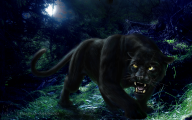 Black Panthers 10 Cool Hd Wallpaper