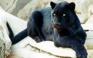Black Panthers 2 Wide Wallpaper