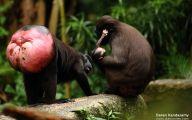 Rare Black Animals 41 Desktop Background