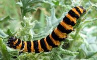 Red And Black Caterpillars 19 Hd Wallpaper