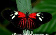 Red And Black Caterpillars 7 Desktop Wallpaper