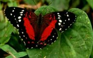 Red And Black Caterpillars 9 Free Wallpaper