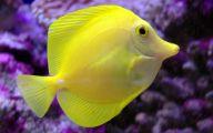 Cute Fish 11 Hd Wallpaper