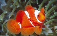 Cute Fish 15 Cool Hd Wallpaper