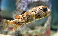 Cute Fish 18 Widescreen Wallpaper