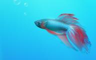 Cute Fish 2 Cool Wallpaper