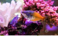 Cute Fish 21 High Resolution Wallpaper