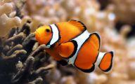 Cute Fish 23 Hd Wallpaper