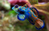 Cute Fish 5 Widescreen Wallpaper