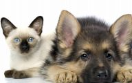 Cute Puppy And Kitten Pictures 2 Hd Wallpaper