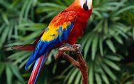 Parrot 10 Free Wallpaper