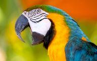 Parrot 11 Cool Wallpaper