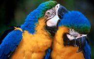Parrot 12 Desktop Wallpaper