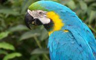 Parrot 13 Widescreen Wallpaper