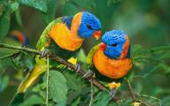 Parrot 14 Widescreen Wallpaper