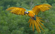 Parrot 17 Cool Hd Wallpaper