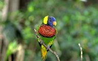 Parrot 18 Hd Wallpaper