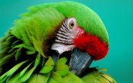 Parrot 19 Background