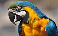Parrot 2 Widescreen Wallpaper