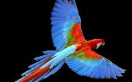 Parrot 21 Widescreen Wallpaper