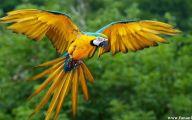 Parrot 22 Desktop Wallpaper