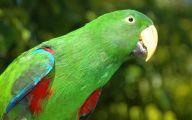 Parrot 3 Desktop Background
