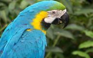 Parrot 5 Widescreen Wallpaper