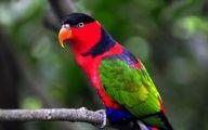 Parrot 7 Cool Wallpaper