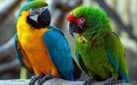 Parrot 9 Desktop Background