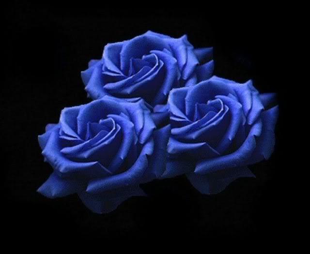 Black And Blue Colors 4 Desktop Background ...