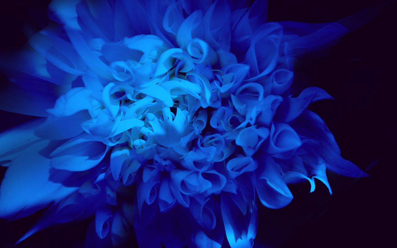 Black And Blue Colors 31 Cool Wallpaper - Hdblackwallpaper.com